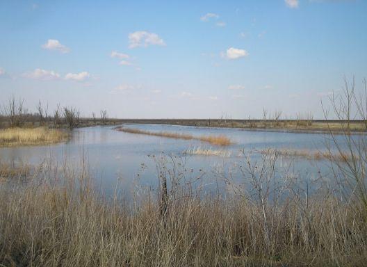 Ранняя весна в заказнике. Фото Л. Серовой. Национальный парк «Хвалынский»
